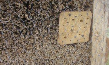 Méhhotel, ahol a rovarok luxusban pihennek