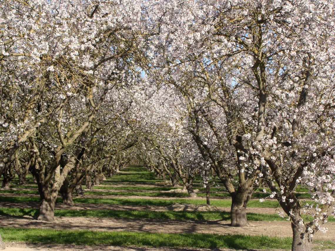 Tavasszal virágzó gyümölcsfák
