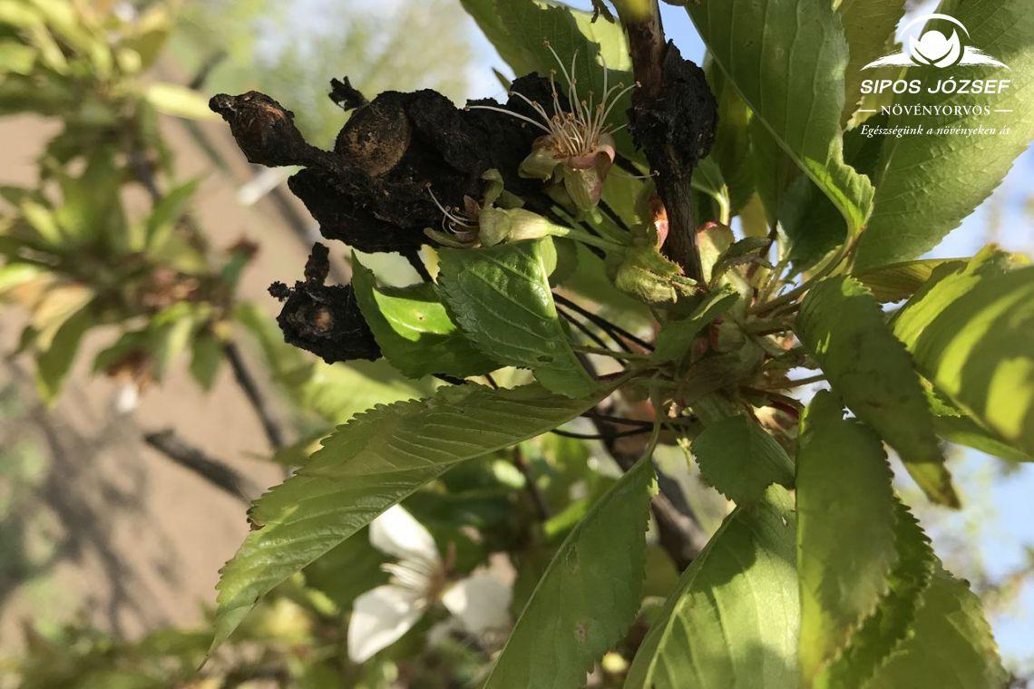 Gyümölcsmúmiák