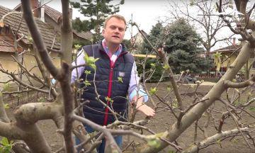 A jövő terméséért - metszés és faápolás