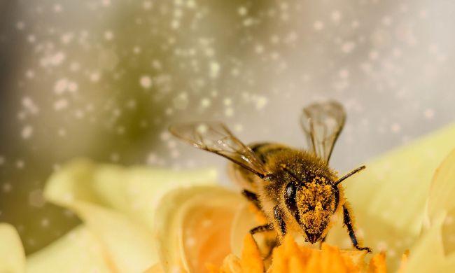 Méhek élete