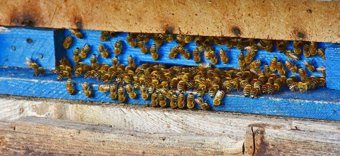 Méhek védelme és a természetben betöltött szerepük