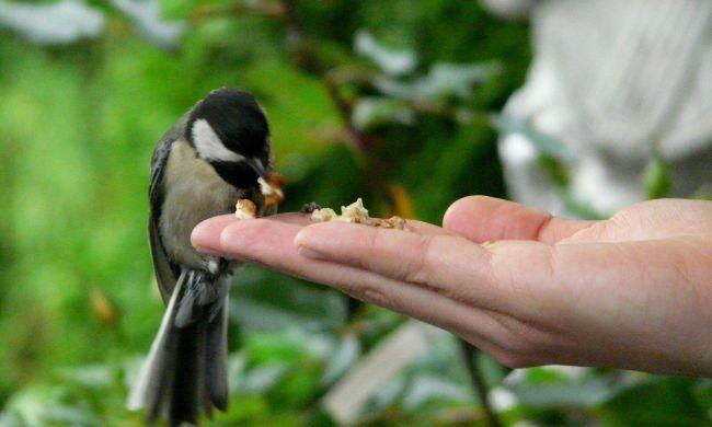 Téli madáretetés, madárvédelem a madarakért...