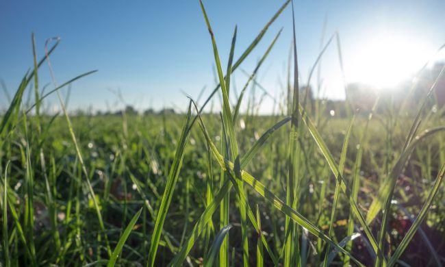 Tavaszi növényvédelmi munkák a szántóföldeken