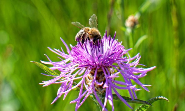 Tegyünk Együtt a méhekért!
