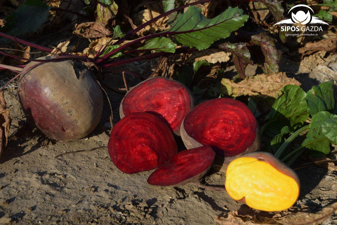 Cékla télire, a gyönyörű színű vitaminbomba