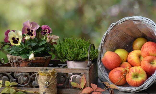 Az őszi virágos balkonláda praktikái