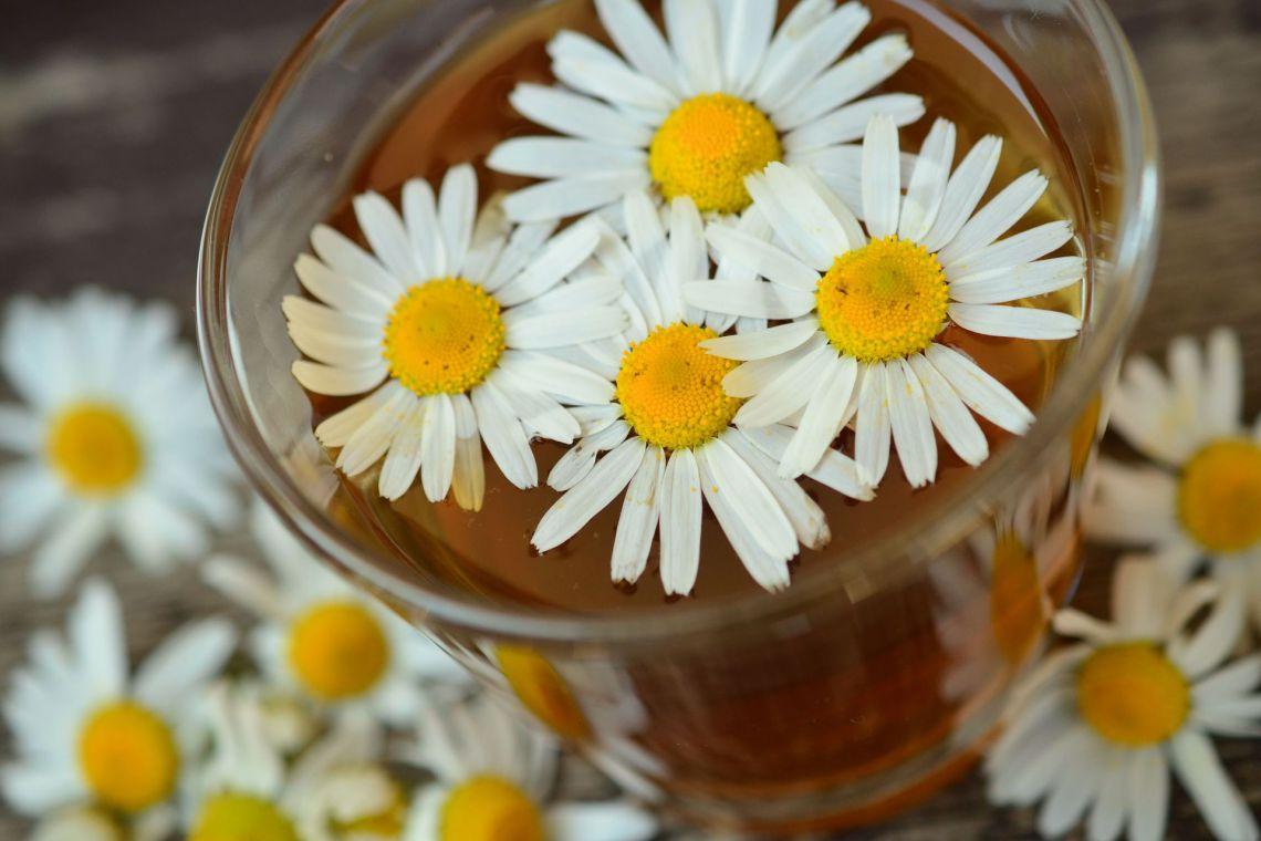 Gyógy- és fűszernövények - Kamilla tea