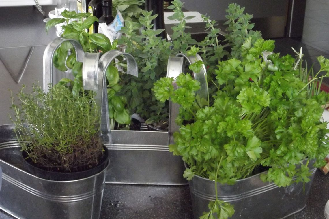 Gyógy- és fűszernövények termesztése