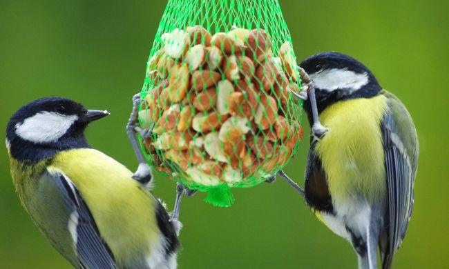 A téli madáretetés, hálánk jele a madaraink munkájáért
