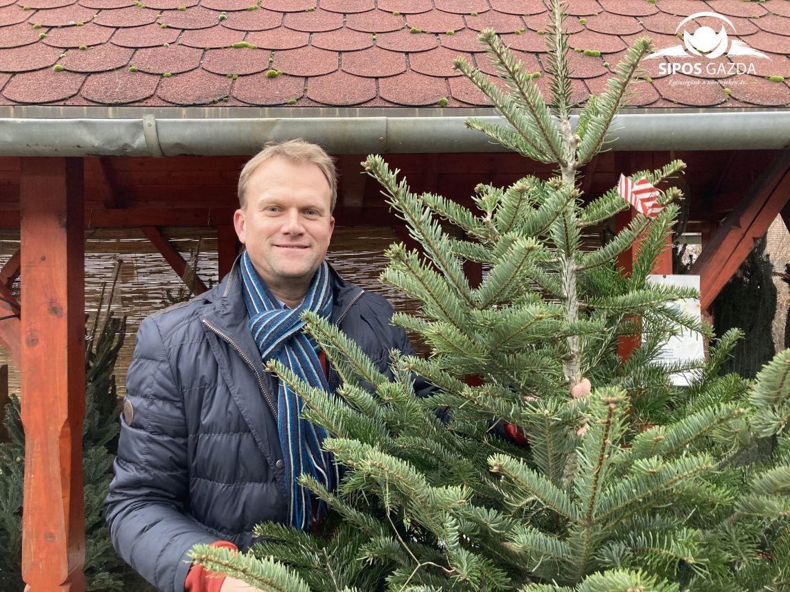Karácsonyfa választási praktikum