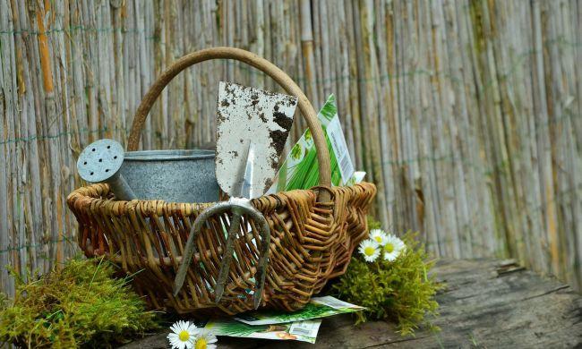 Februári teendők kertjeink világában