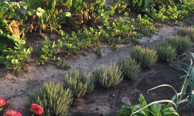 Környezettudatos ültetés, ajánlott növénytársítások...