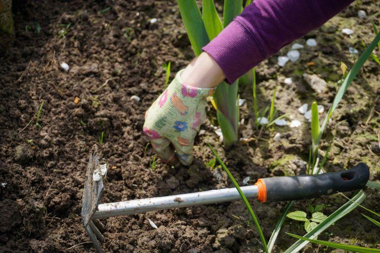 Kertészkedés, kerti praktikák