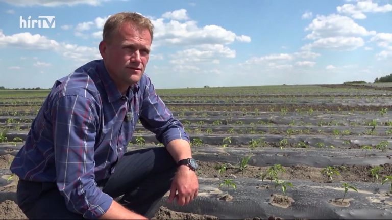 A fűszerpaprika-termesztésről a HírTV Soroló műsorában…