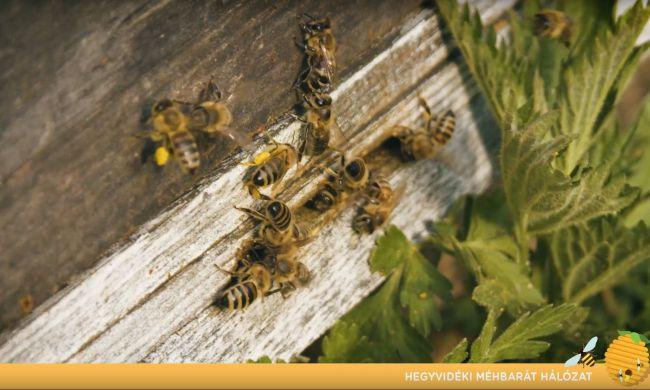 Tegyünk Együtt a megporzó, hasznos rovarokért...