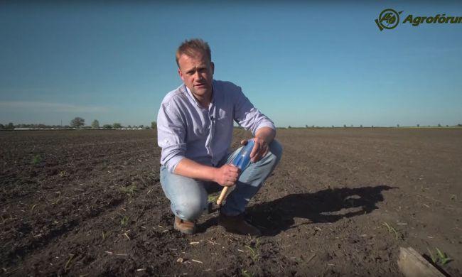 A talajlakó kártevők felmérése Sipos gazdával